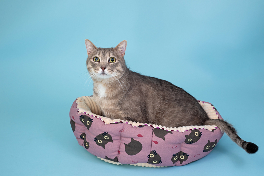cat-bed-product-photography