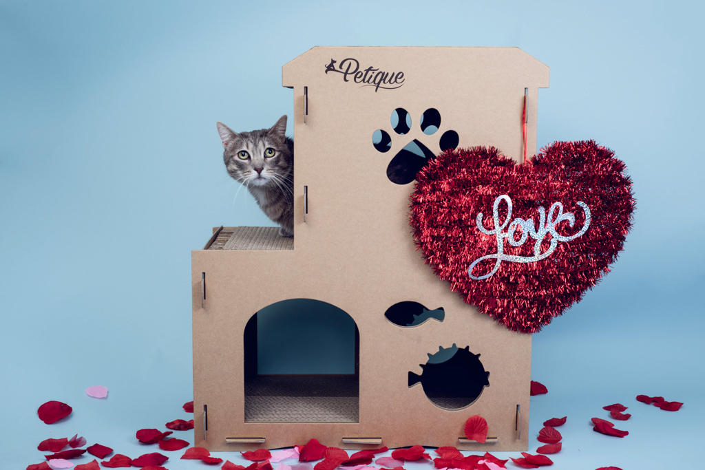 cat-house-product-photography