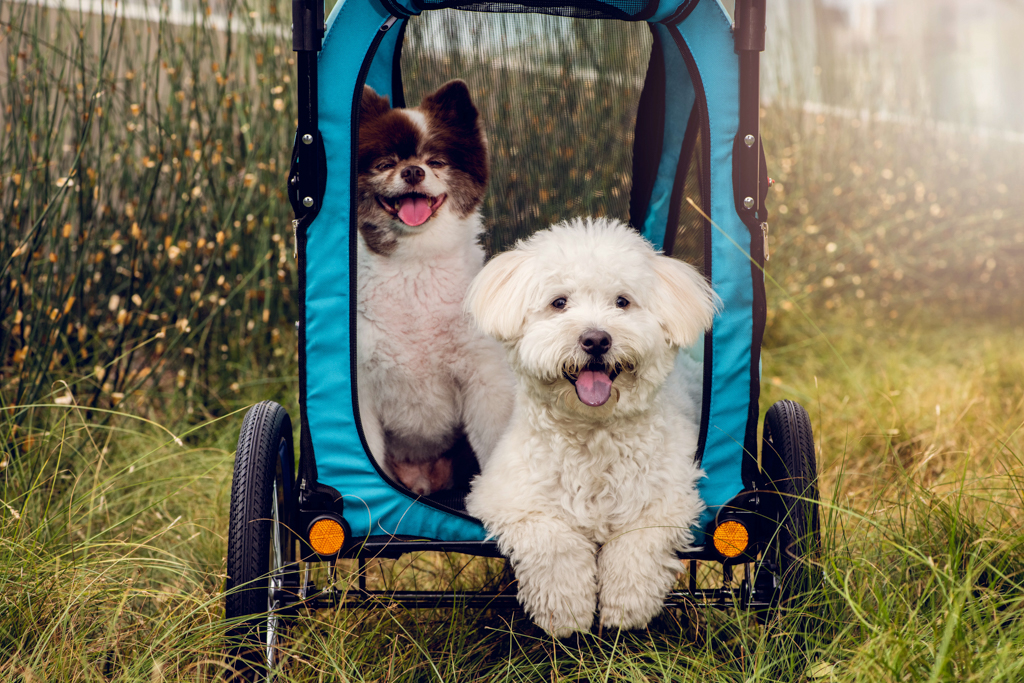 product-photography-dogs-on-stroller